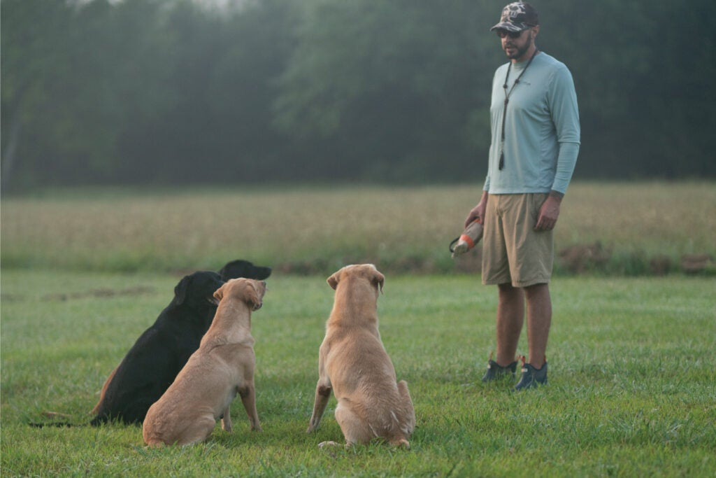 Dog trainer with three hunting dogs in the field.